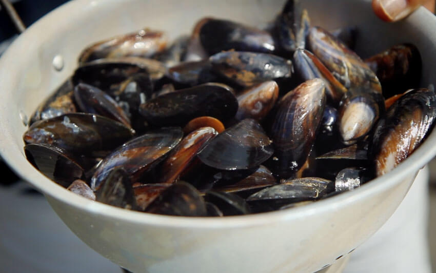 Wash the mussels thoroughly - Gen Taylor Video Recipe